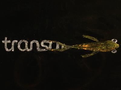 TransamoPoissonsmall.png